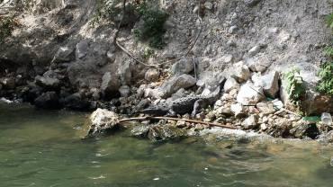 Cañón del Sumidero - Coccodrillo