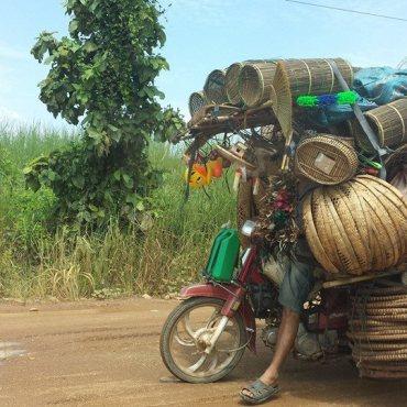 Vite cambogiane