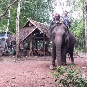 Passeggiata con elefante