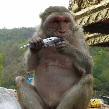 Scimmie sul Monastero Taung Kalat