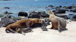 Allattamento - Punta Carola