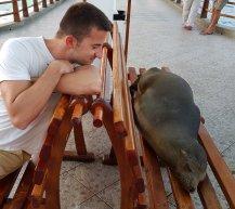 Leone marino che dorme sulla panca