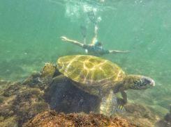 Nuotando con una tartaruga