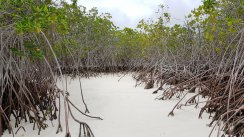 Spiaggia con mangrovie