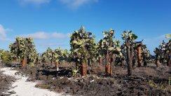 Foresta di cactus