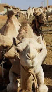 Mercato dei Dromedari - Ondurmann